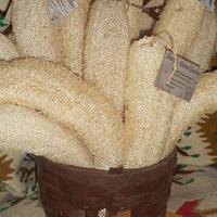 loofah-sponge-seeds